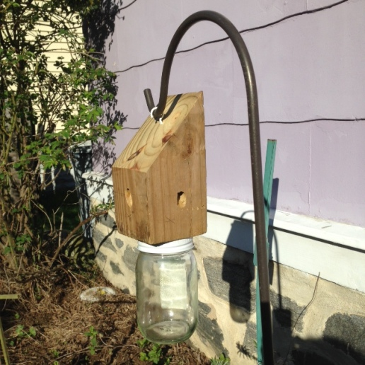 Carpenter bee trap